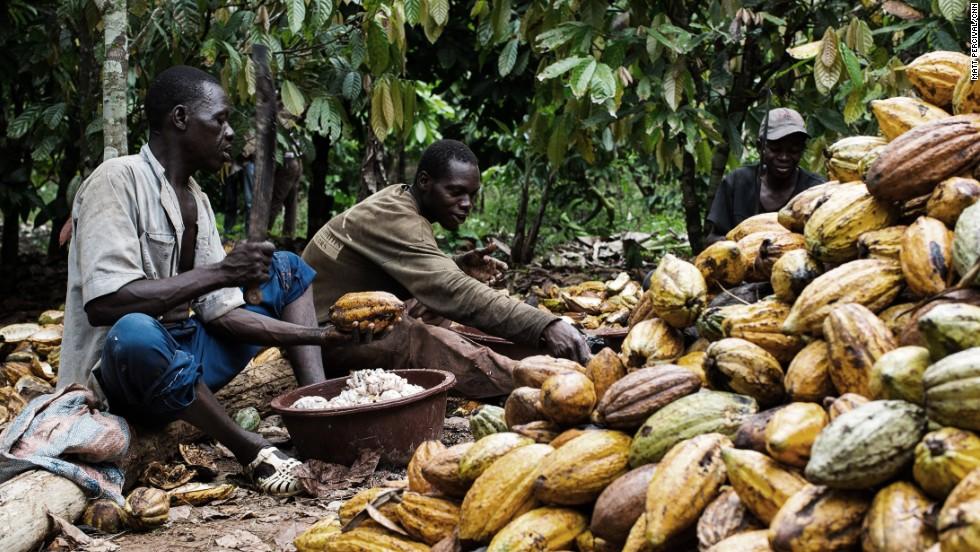 Côte d'Ivoire: grève des producteurs de cacao