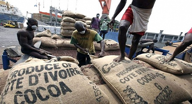 Côte d'Ivoire : le volume de cacao délivré dans les ports en hausse de 33% au 13 août
