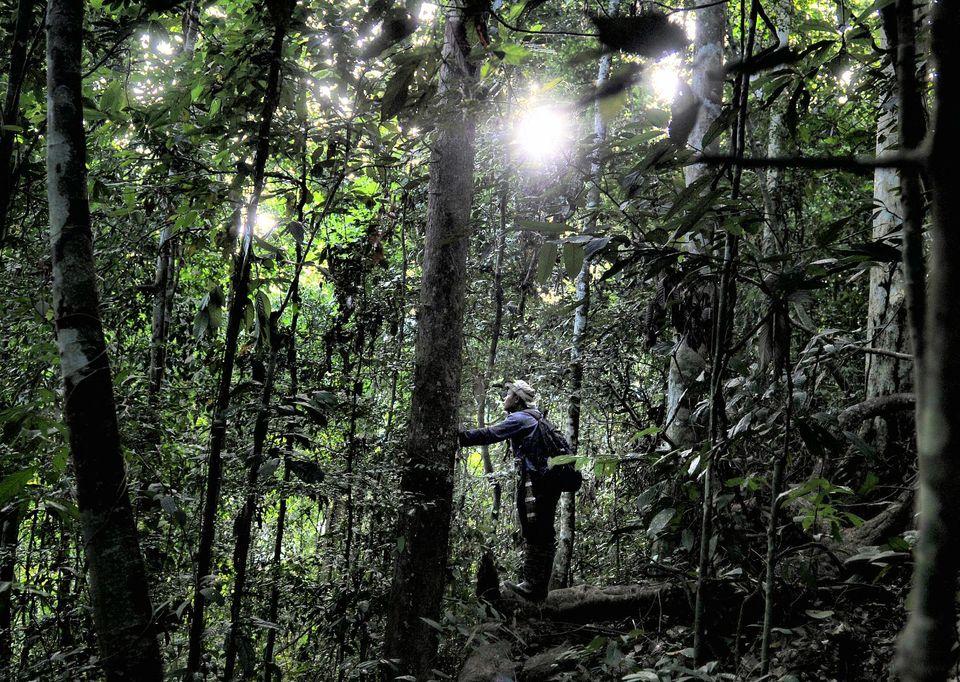 Environnement : «Les forêts régulent notre climat planétaire»