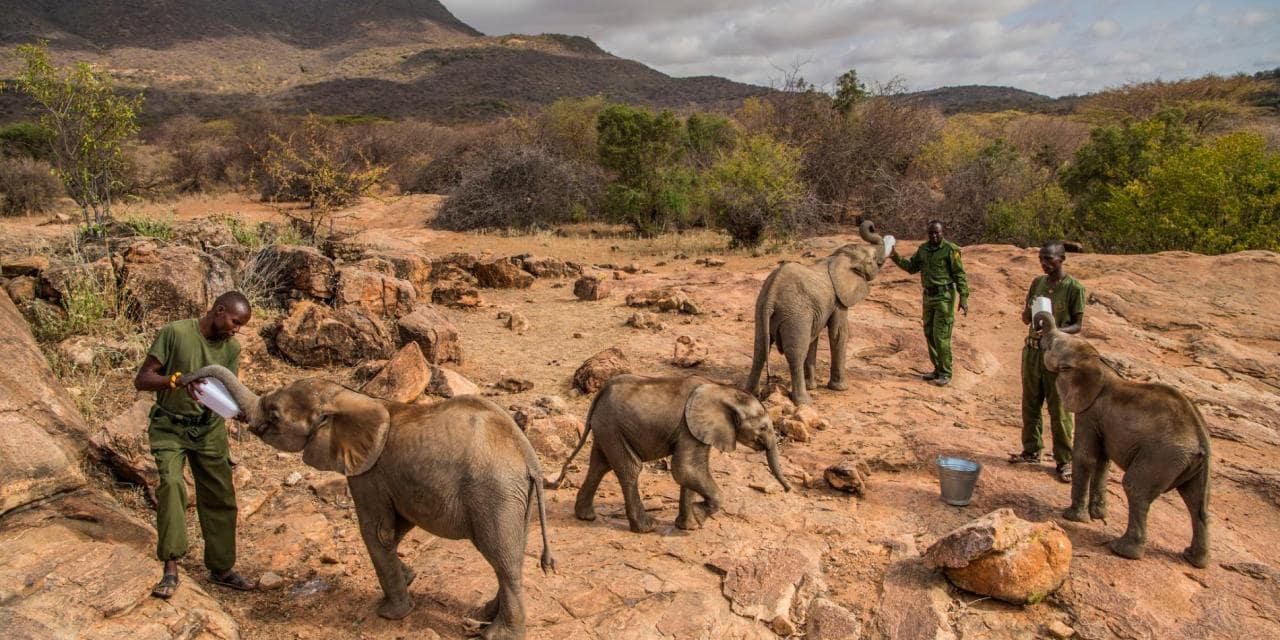Kenya: les communautés locales se taillent la part du lion dans le partage des revenus pétroliers