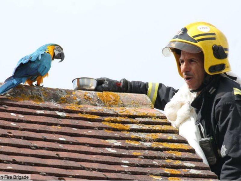 Insolite : les pompiers viennent en aide à un perroquet, celui-ci leur répond par une grossièreté !