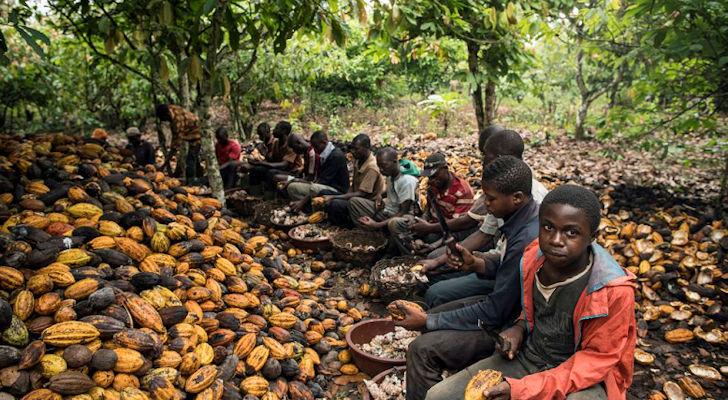 Des enfants prisonniers de la forêt, dans des plantations de cacao en Côte d'Ivoire