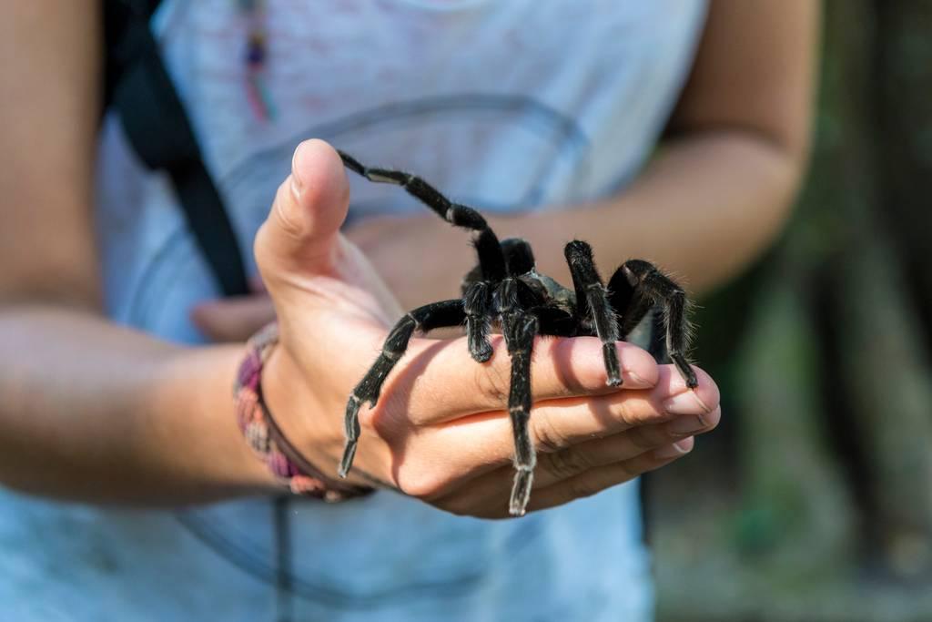 Du venin d'araignée pour soigner les problèmes d'érection