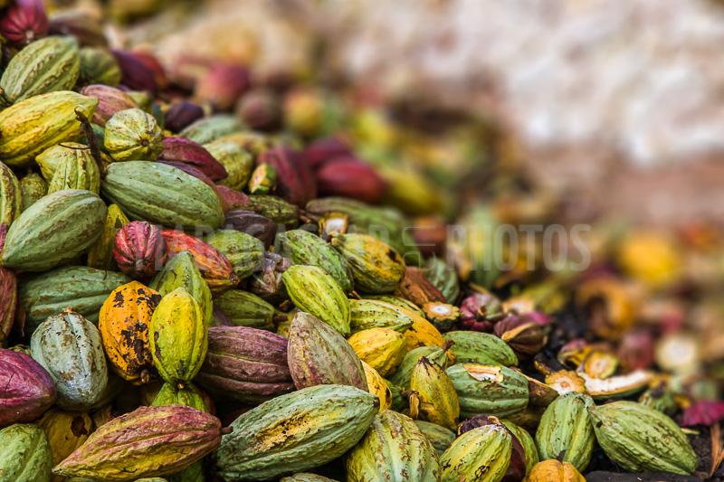Le puissant message  du cacao aux élites ivoiriennes