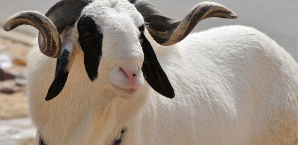 Fête de l'Aïd ou de la Tabaski: en Guinée, cher mouton.......