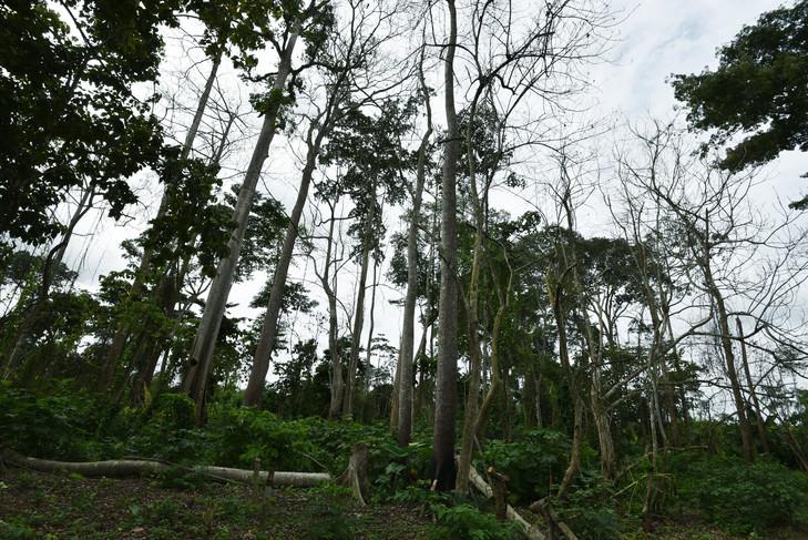 Préservation de la forêt: La Côte d'Ivoire projette une couverture de 8 millions ha en 2045