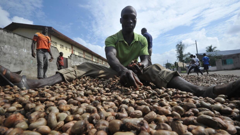 Vente de la noix de cajou : Fraude et rackets s'intensifient à la frontière Nord-Est ivoirienne.